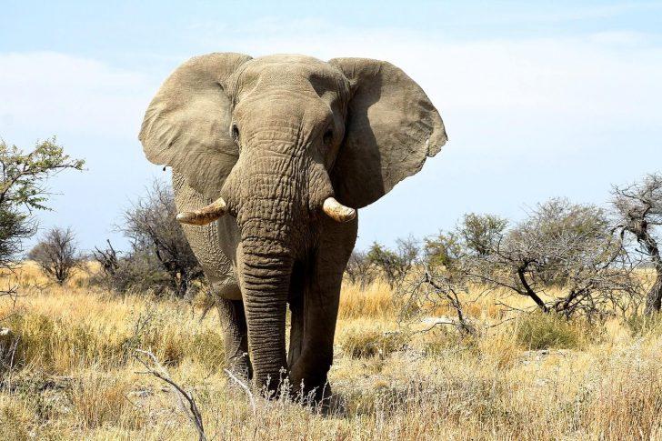 éléphant namibie
